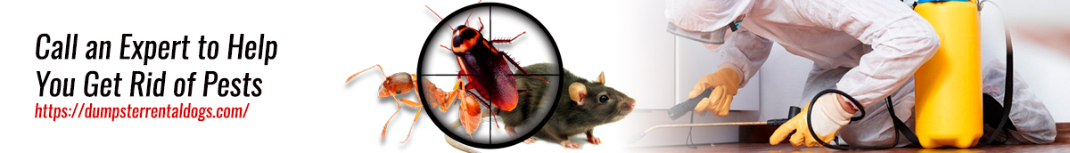 Call an Expert to Help You Get Rid of Pests